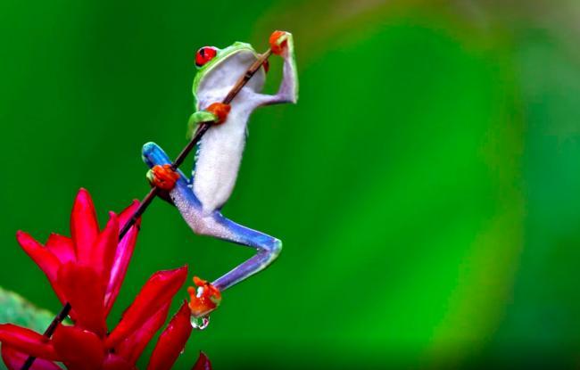 Новый год в Коста-Рике!